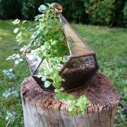 florarium-beultetve-1